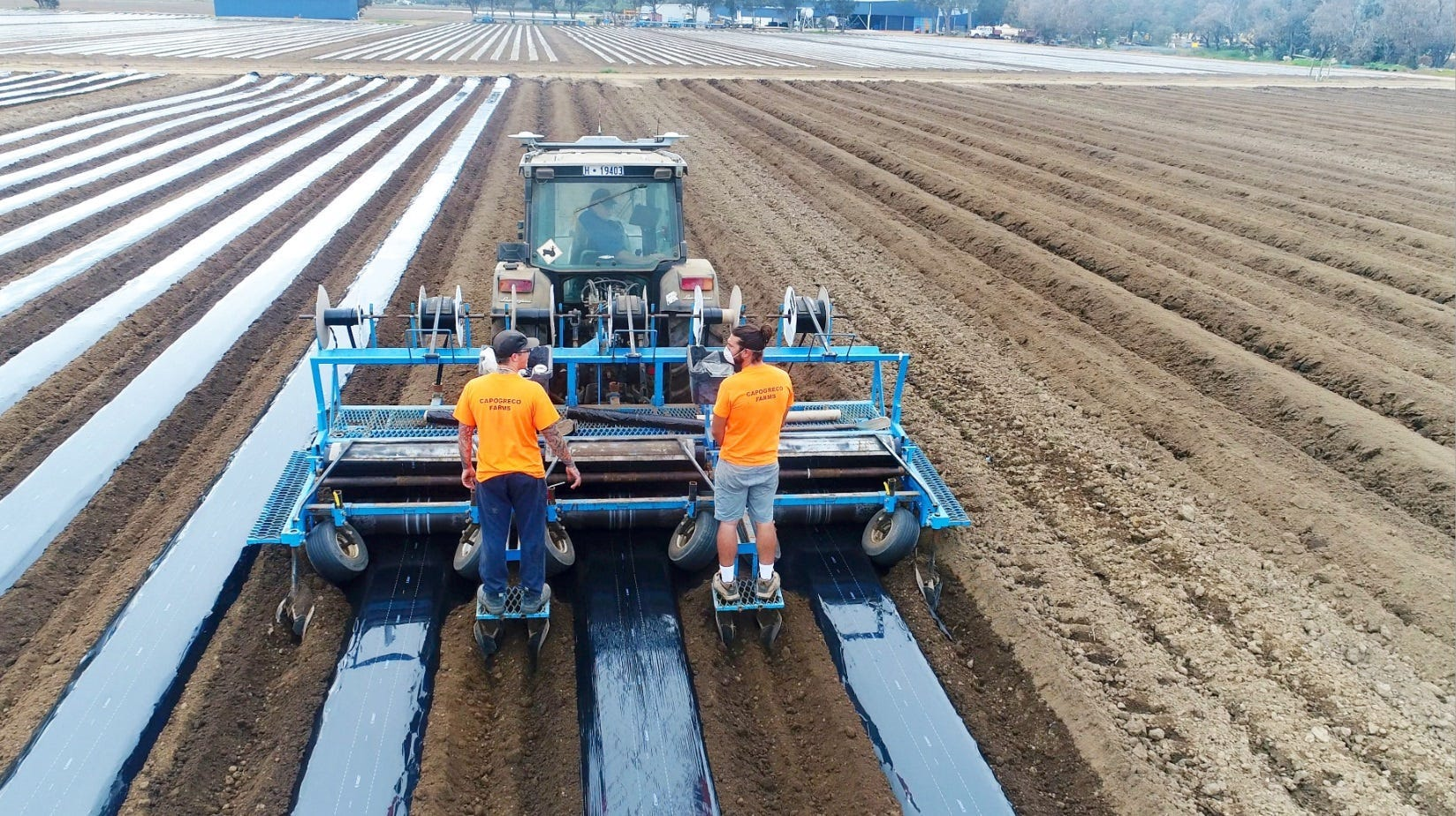 Laying mulch film at Capogreco Farms