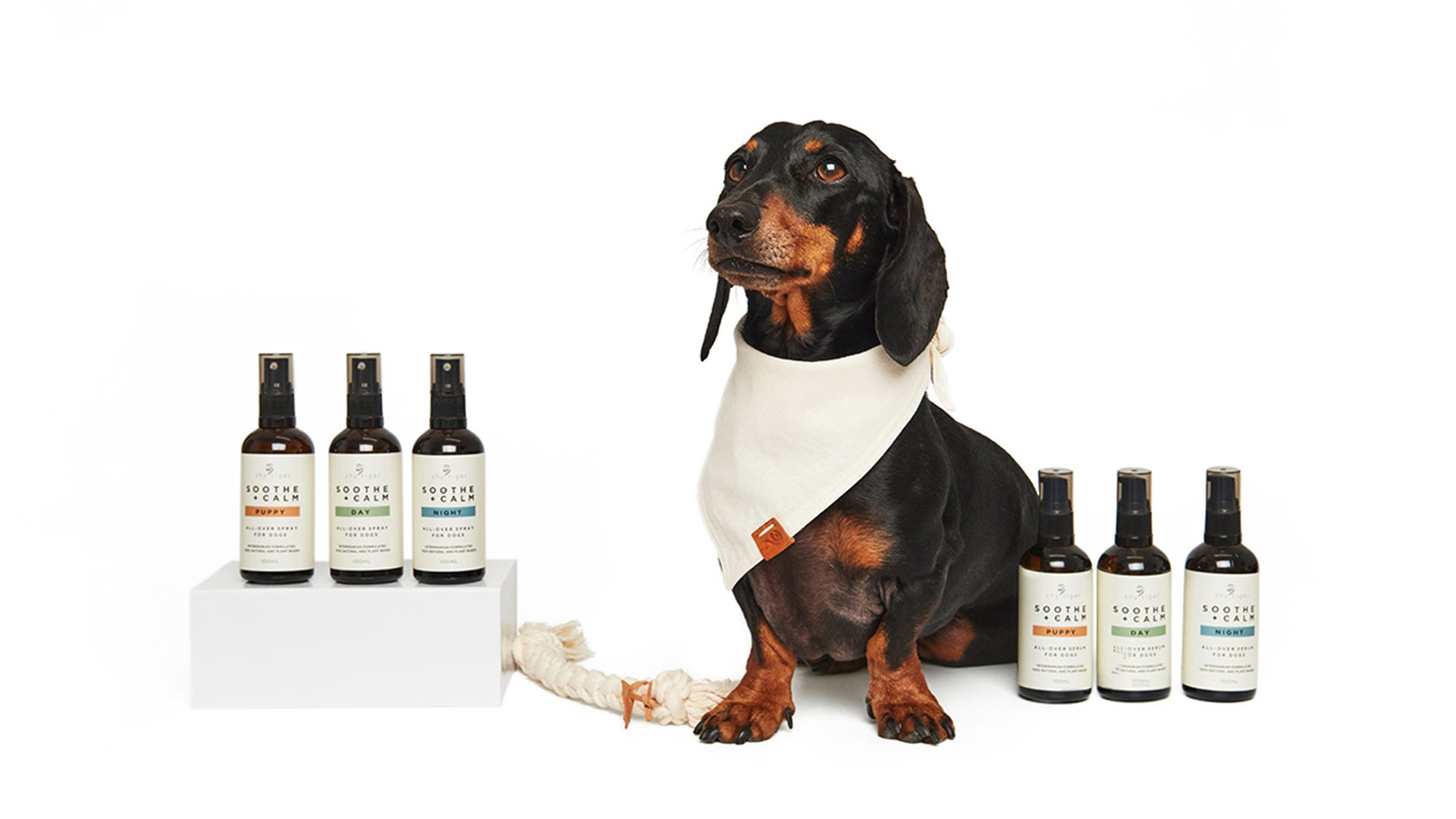 Shy Tiger products with dachshund